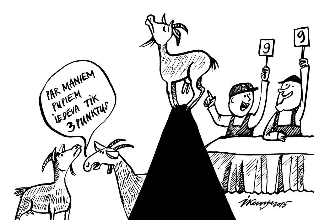 19-10-2015 — Saskaņā ar valdības lēmumu kazu eksterjers tiek vērtēts deviņu punktu skalā - īpaši kazu pupu izvietojums pret zemi.